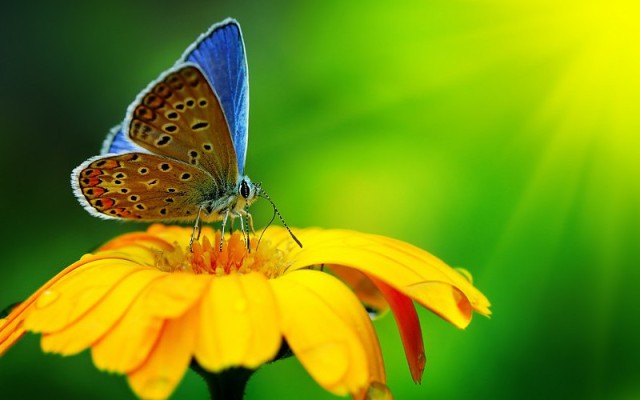 beautiful-butterfly-yellow-flower-water-droplets-images-766308